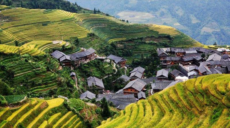 شالیزارهای برنجی لانگجین