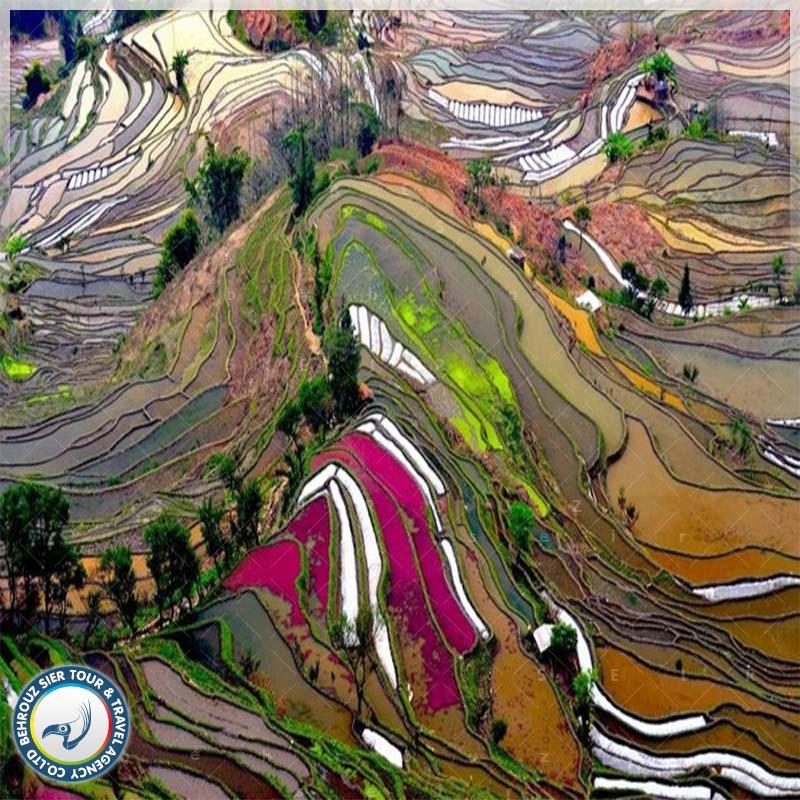تراس های برنج یوآن یانگ تور چین بهروزسیر