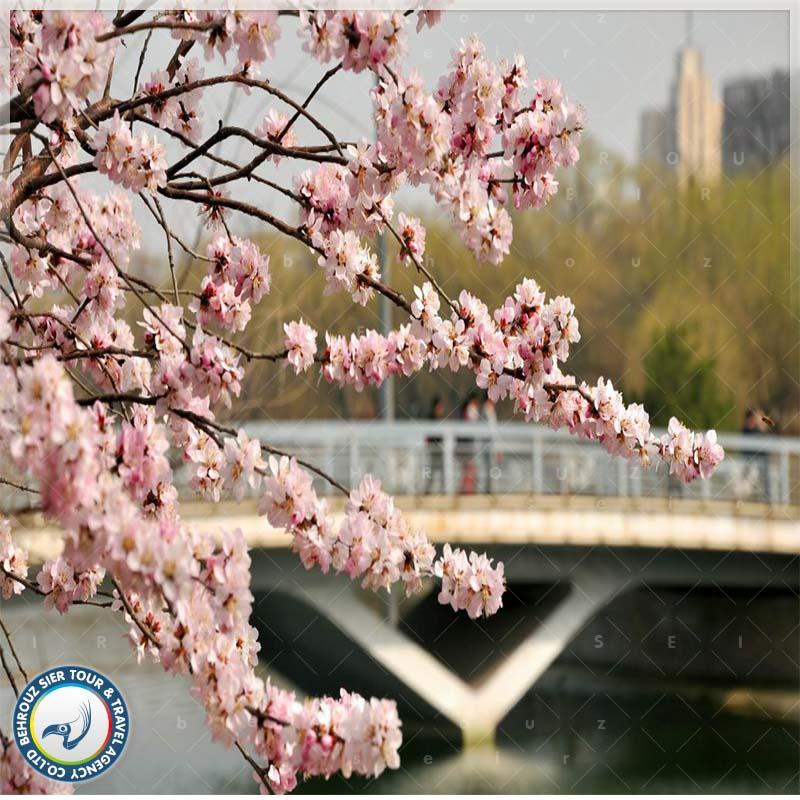 تور چین در بهار بهروزسیر