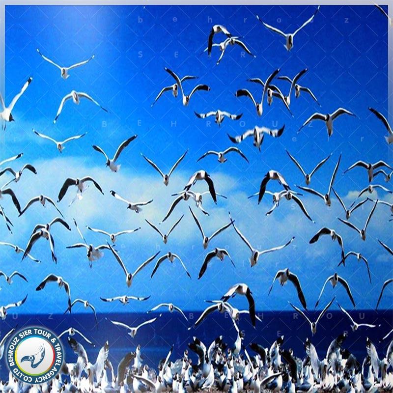 دریاچه-کینگ-های-چین-بهروزسیر