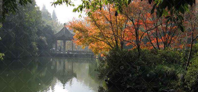 اکوسیستم-های-اطراف-دریاچه-غربی-در-هانگ-ژو-بهروزسیر