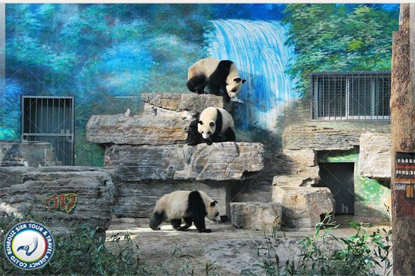 باغ-وحش-پکن-بهروزسیر