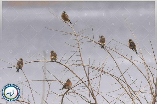 باغ-پرندگان-شهر-پکن-بهروزسیر