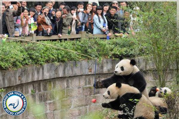 بهترین-مکان-برای-تماشای-پانداها-در-چین-بهروزسیر