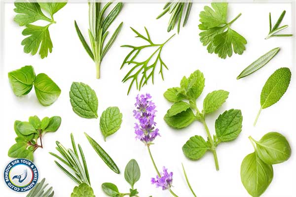 استفاده-از-ریشه-گیاهان-برای-جوانسازی-پوست-بهروزسیر