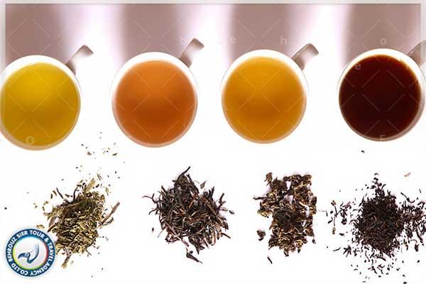 چای-سبز،-چای-سفید-یا-چای-سیاه-بهروزسیر