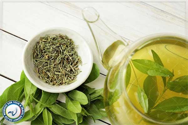 چای-سبز-روش-چین-بهروزسیر